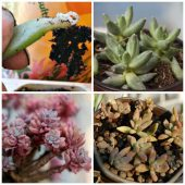Propagating succulent leaves and cuttings