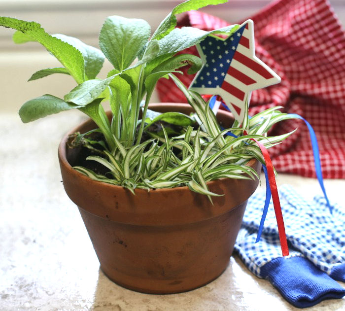 4th of July foxglove planter