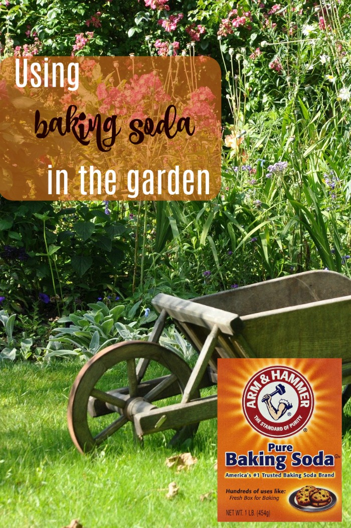 "Wheel barrow in the garden with box of baking soda and words reading ""using baking soda in the garden."""