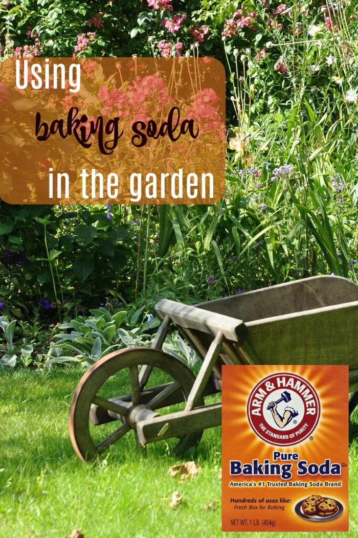 Baking soda has many uses in the garden