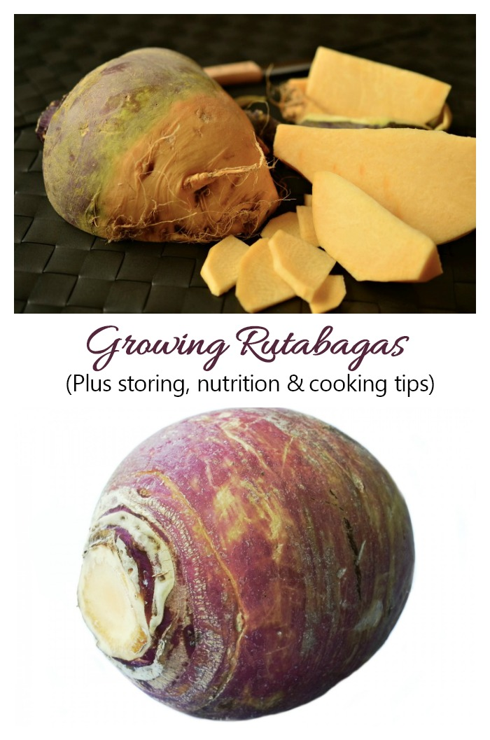 Growing rutabagas is easy as long as you have the patience for a long growing season. See tips for growing, storing and using this root vegetable