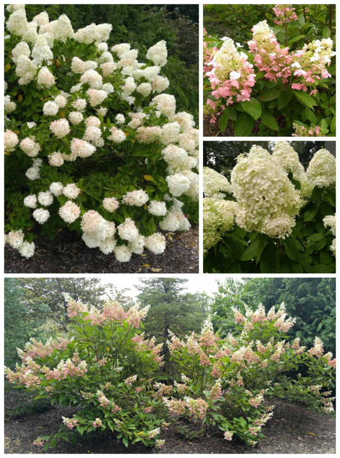 Perennial shrubs in Wellfield Botanic Gardens