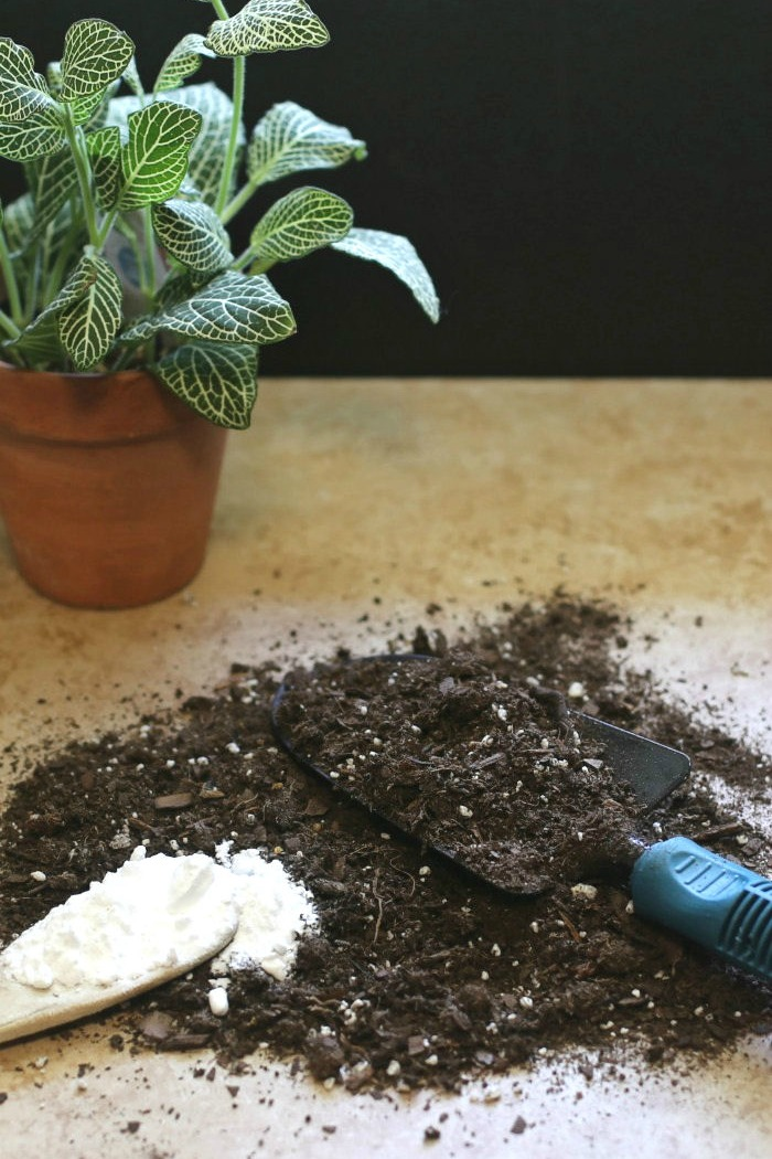 Baking soda has dozens of uses in the garden, from soil testing to use as a fungicide