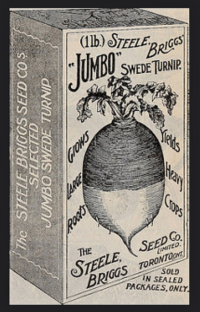 Swede Turnip photo from 1902