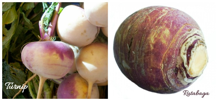 Turnip vs rutagagas