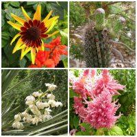 Foellinger-Freimann Botanical Conservatory gardens