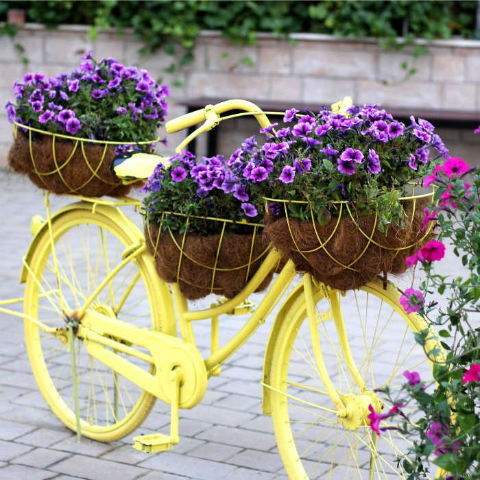 Yellow bicycle with planter baskets and purple flowers.