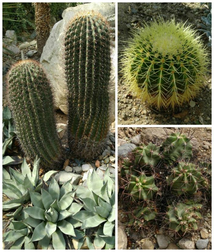 Cactus plants in the desert garden