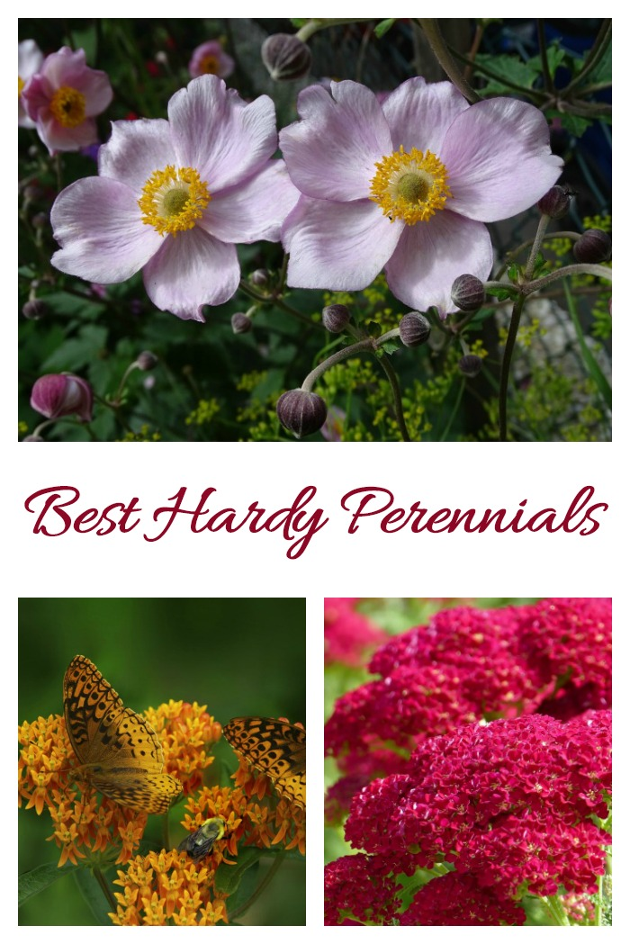 These cold hardy perennials will come back year after year in spite of freezing winter weather.