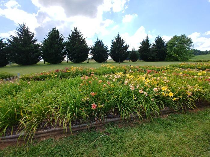 Daylily Garden - Wildwood Farms, Floyd Virginia