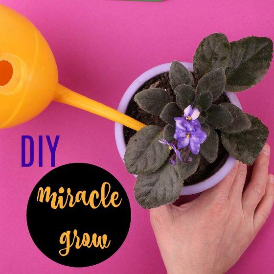 DIY Miracle-gro