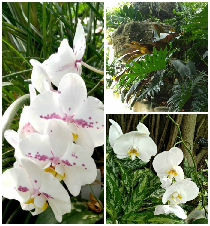 Orchids and philodendrons
