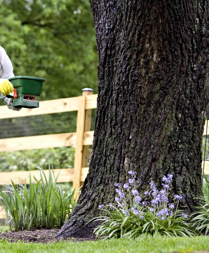 fertilizing plants near a tree