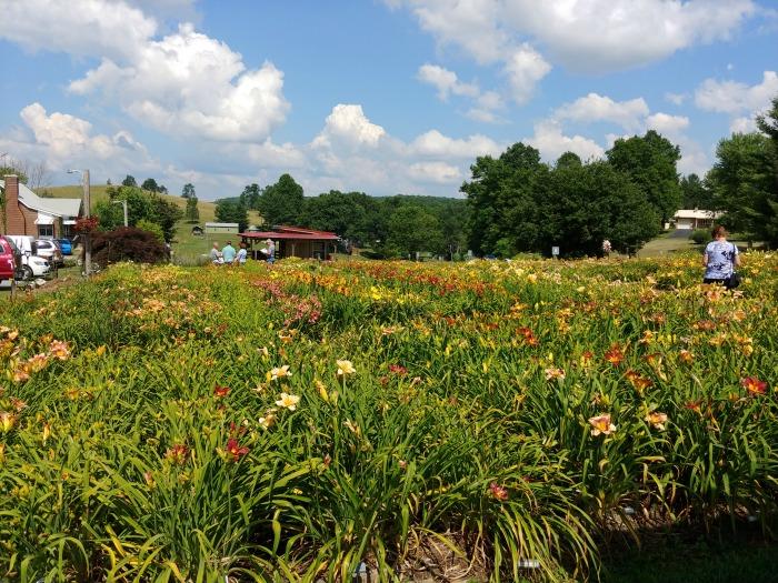Wildwood Farms - Daylily gardens Virginia