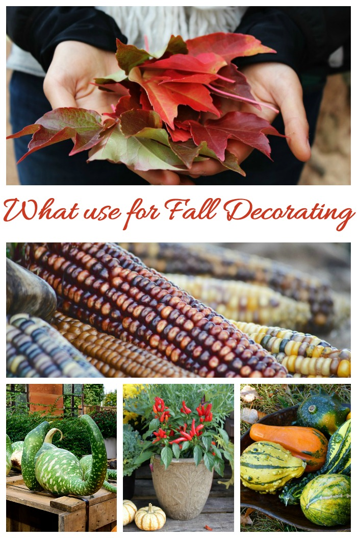 Things to use for fall decorating projects. Many can be found in your own yard!