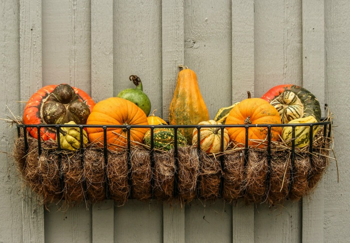 Gourds wall decoration in a wire basket
