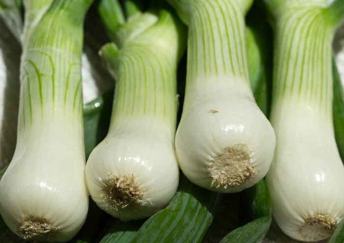 You can substitute the white end of scallions for shallots