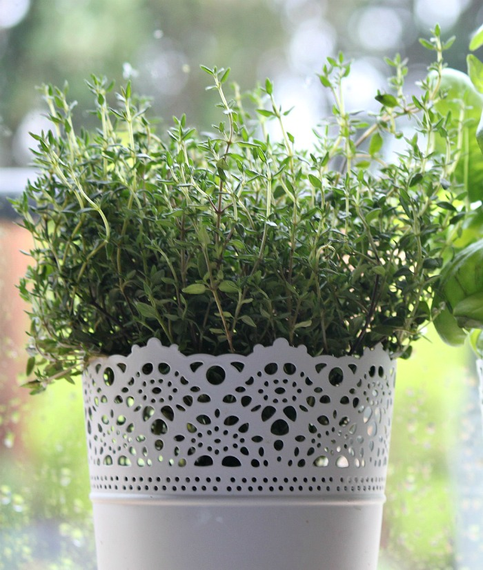Thyme is a versatile herb that is cold hard to zone 5.