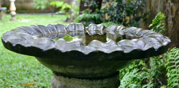 Clean bird bath with water in it.