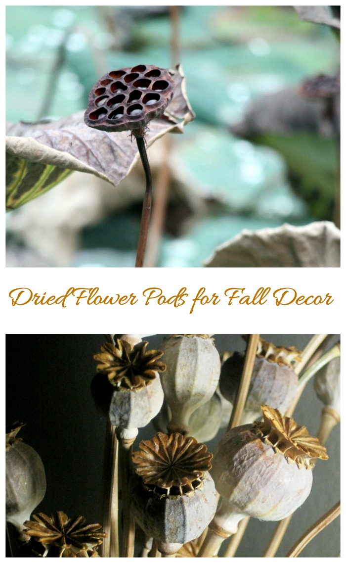 Dried seed heads and pods work great in all types of fall greenery projects.