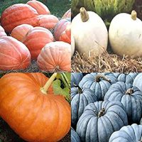 BIG PACK (80-90+) Dill Atlantic Giant, Casper White, Cinderella Rouge vif D'Espampes, Jarrahdale Blue Pumpkin Seeds - Non-GMO Seeds By MySeeds.Co (BIG PACK - Pumpkin Mix II)
