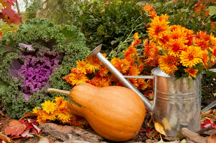 Fall garden scene. Decorating with greenery starts in the garden.