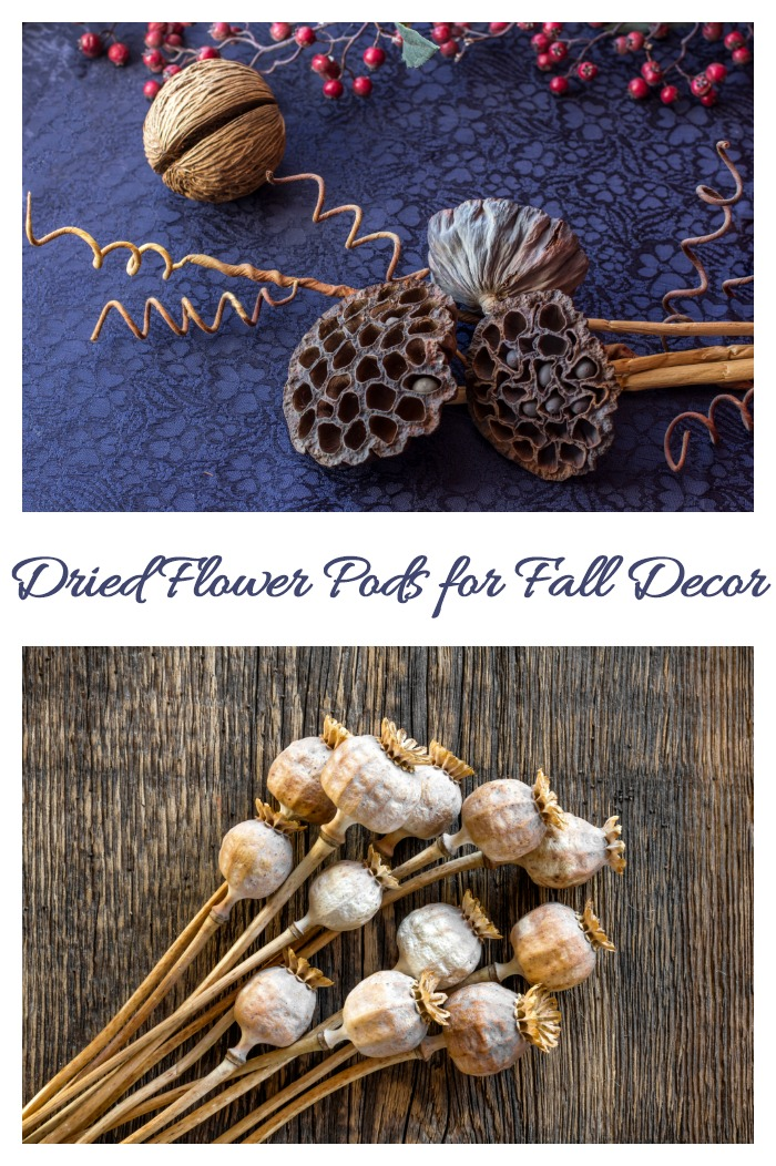 Dried lotus and poppy flower pods for decorating with natural elements