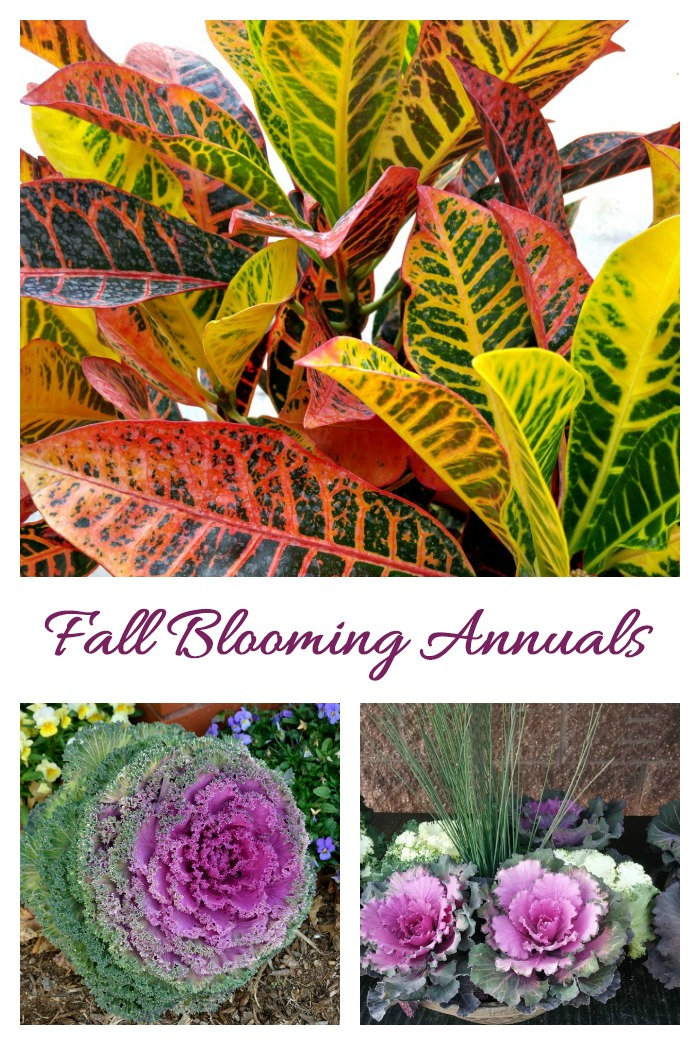 Collection of fall blooming annuals