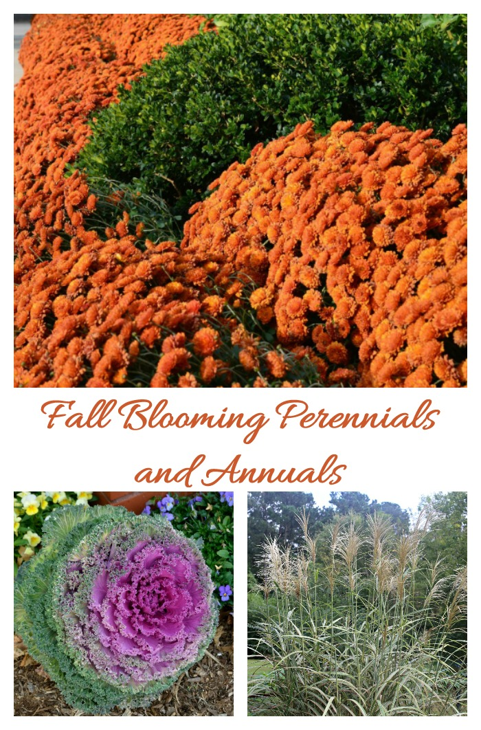 Fall blooming perennials and annuals