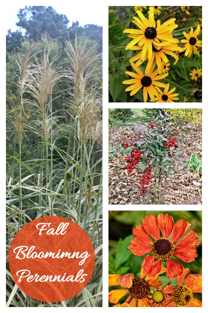 Perennials that bloom in the fall