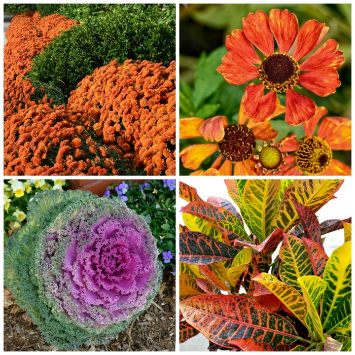 Fall Blooming Plants
