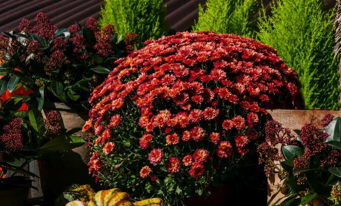 Fall flower scene