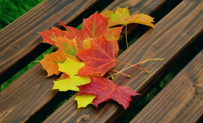 Fall leaves on a bench