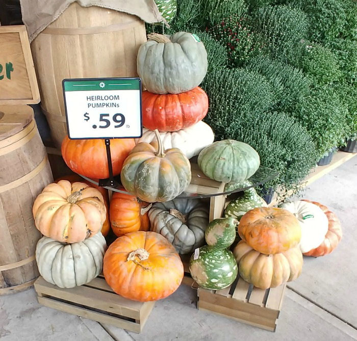Heirloom pumpkins come in all shapes and sizes are are perfect for fall decorating.