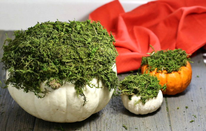 Pumpkins covered in moss