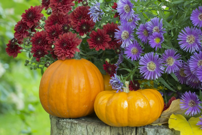 Fall flowers with pumpkins.