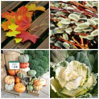Types of greenery for fall decorating projects