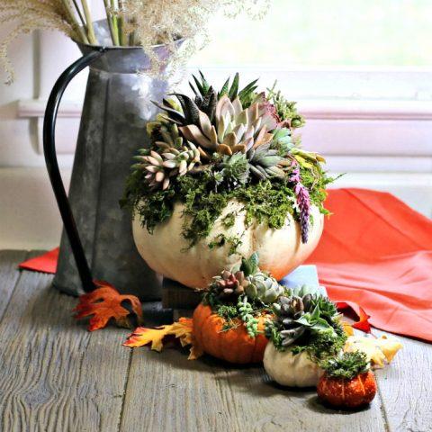 Diy Pumpkin Succulent Planters Easy Fall Pumpkin Centerpiece