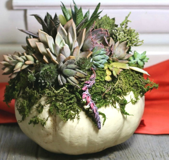 Succulents and pumpkins make a great fall decor choice