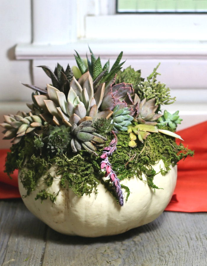 White pumpkin succulent planter