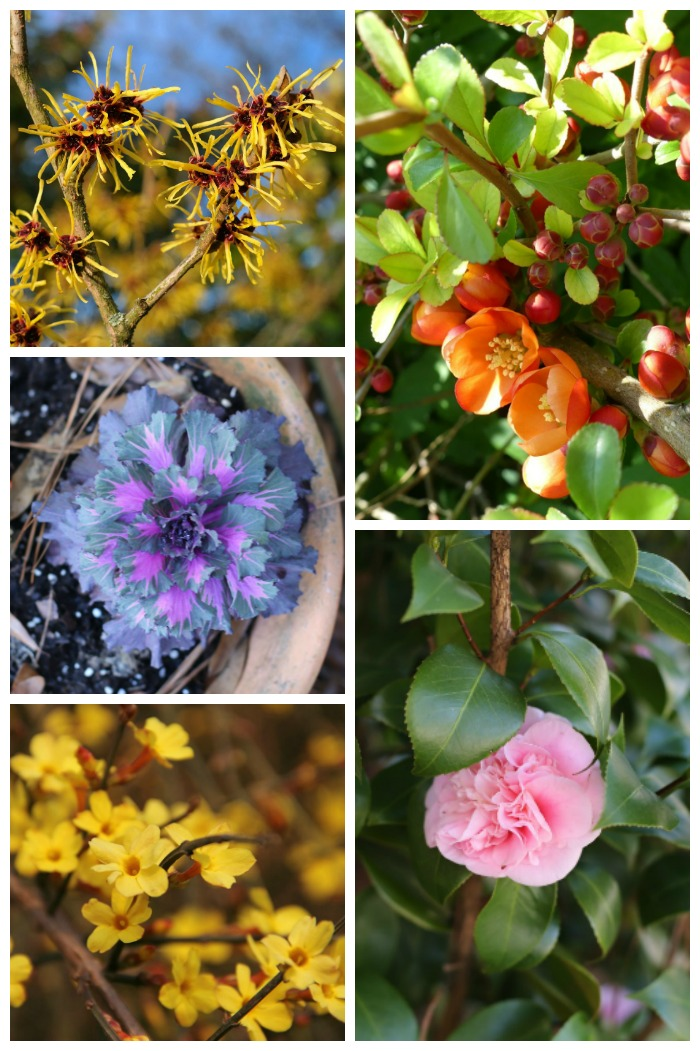 Grow these winter flowering plants to add color during the coldest weather months