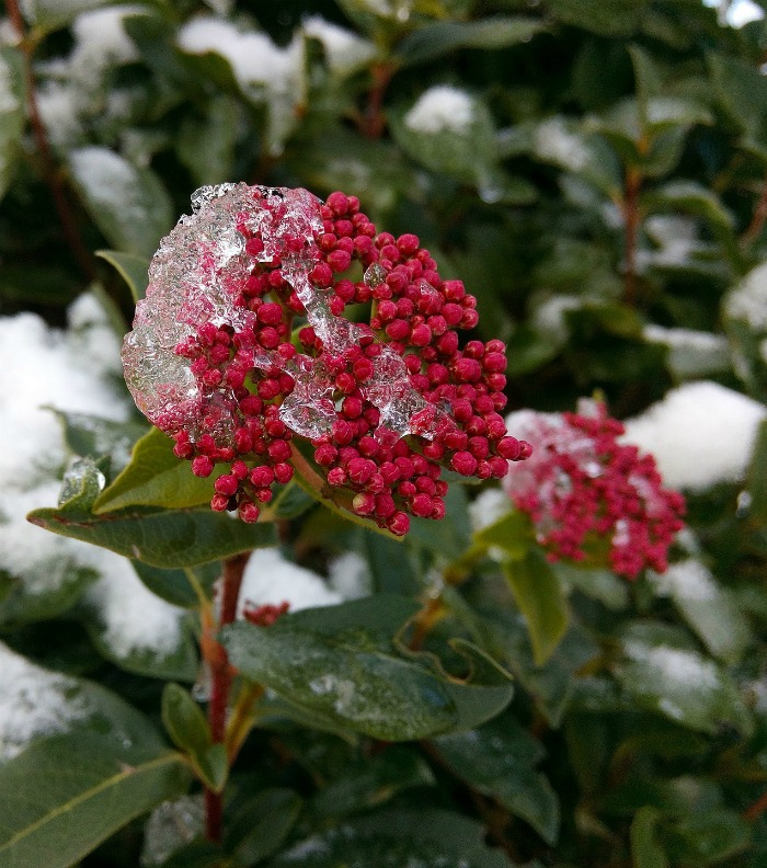 Winter Flowering Plants For Cold Weather Color