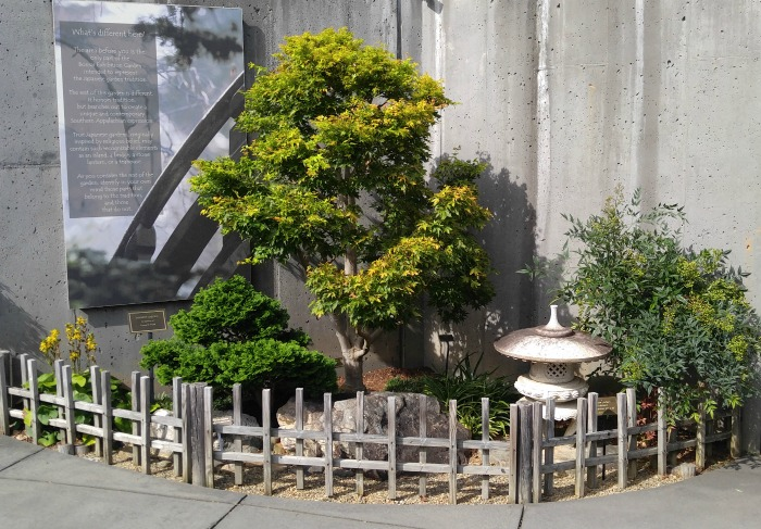 Bonsai garden display