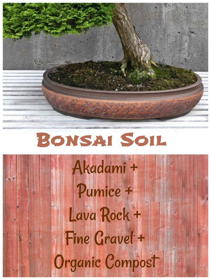 To make bonsai soil, combine akadami, pumice, lava rock, fine gravel and organic compost. Click through to learn about bonsai plants.