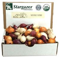 Stargazer Perennials Mixed Red, White and Yellow Onion Sets 8 oz | Organic Non-GMO Bulbs - Easy To Grow Onion Assortment