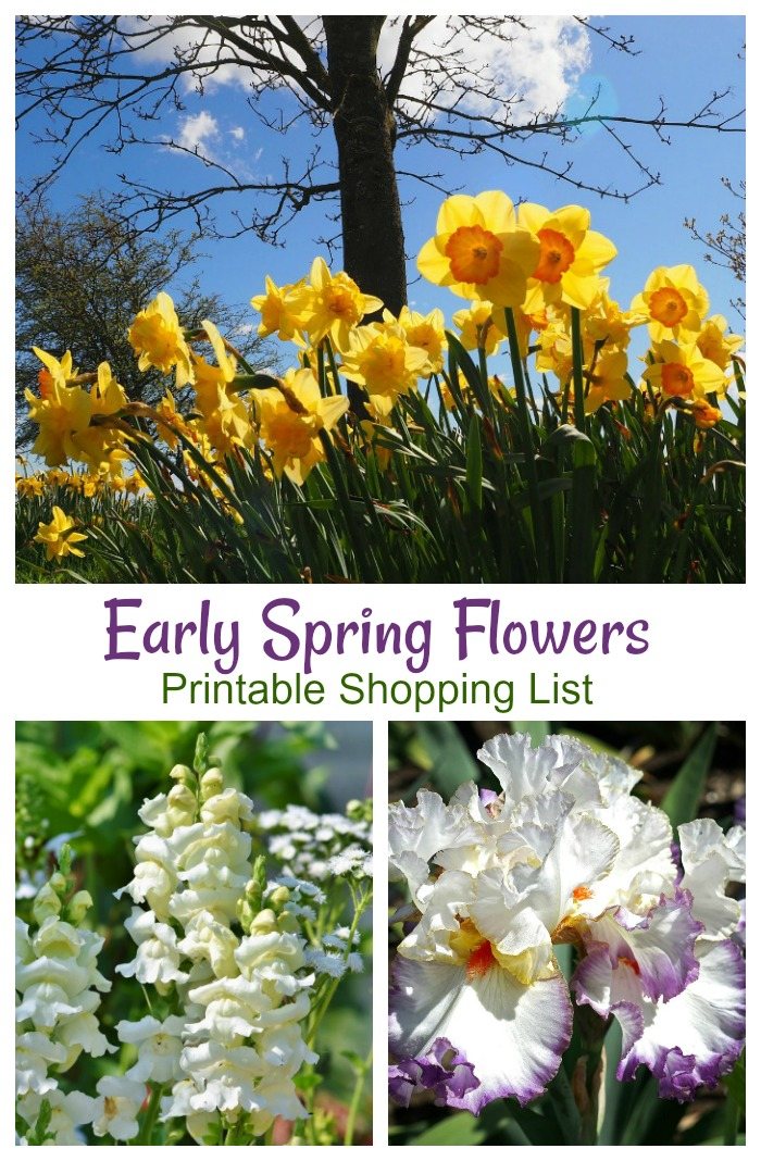 Early Spring Blooming Plants that can take the cold