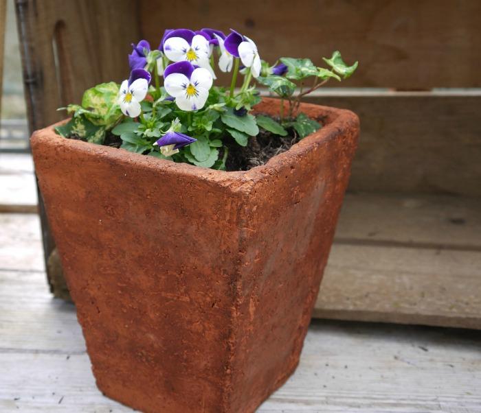 pansies in a terra cotta pot