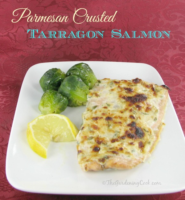 Parmesan Crusted Salmon Fillets