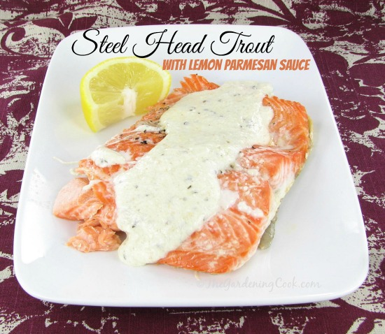 Steel Head Trout with Lemon Parmesan Sauce
