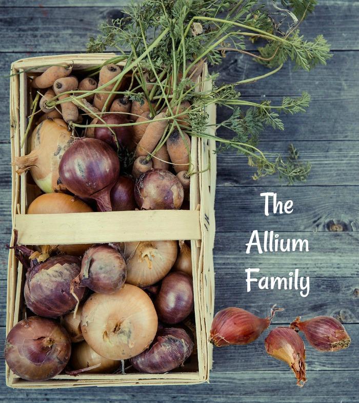 Members of the allium family